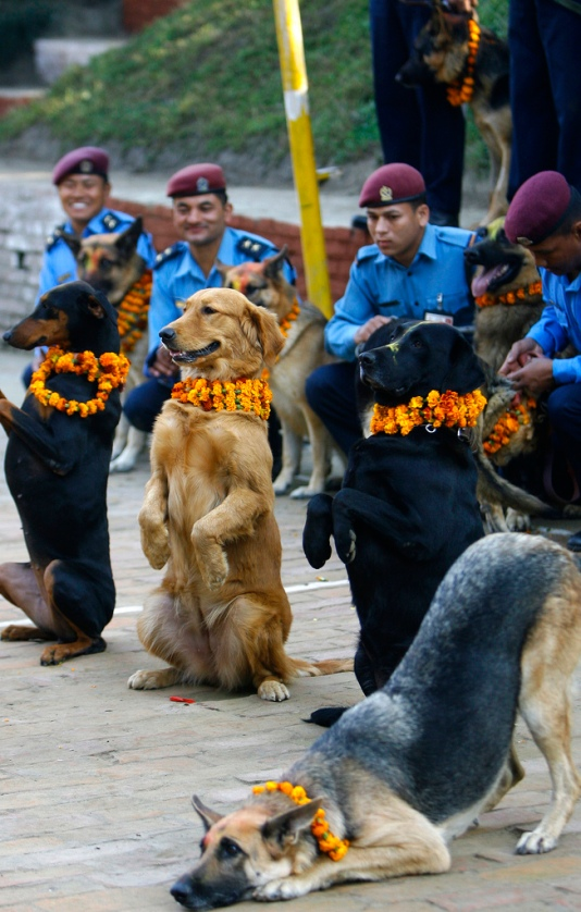 Nepalese policemen pose with their dogs